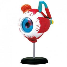 MGM - Explora - Anatomie de l'oeil - Expérience anatomie