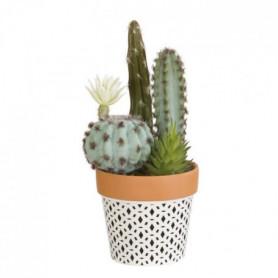 Composition de Cactus fleuri et plantes grasses - En pot ethnique
