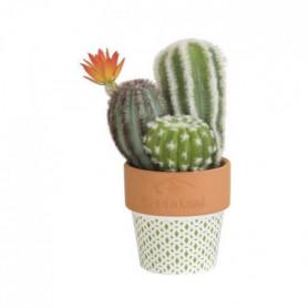 Composition de Cactus fleuri - En pot ethnique vert